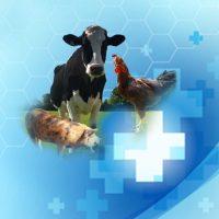 vet-pharma